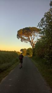 j37 arbre